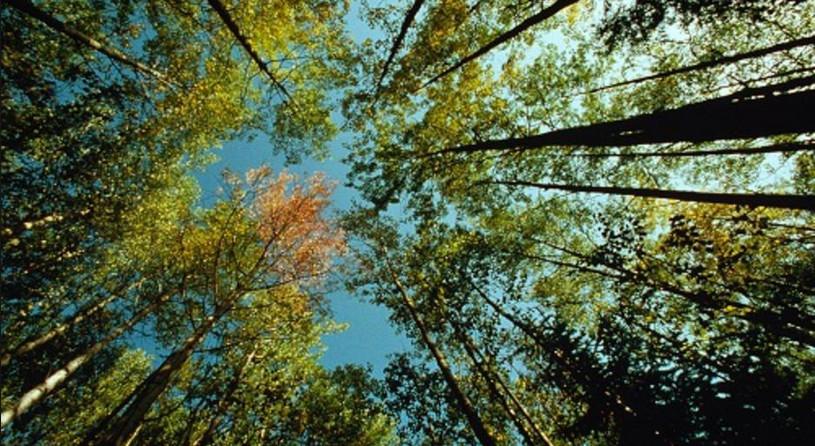 Поздравление с Днём работников леса (лесного хозяйства)